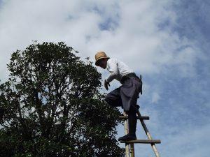 Tree Pruning Milton Keynes